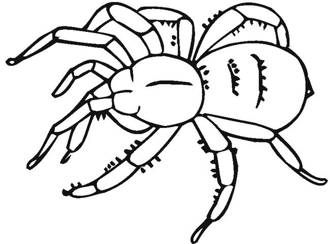 picture about Spider Printable referred to as Spider Condition Template - 55+ Crafts Colouring Webpages Cost-free