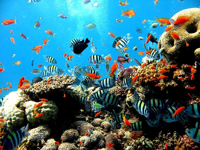 photo relating to Fish Tank Background Printable called 50+ Least complicated Aquarium Backgrounds Totally free Quality Templates