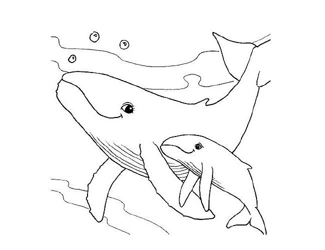 55 shark shape templates crafts colouring pages free premium