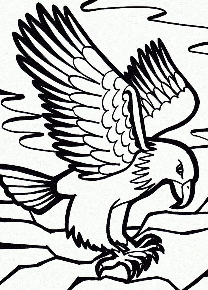 Eagle Template Animal Templates Free Amp Premium Templates