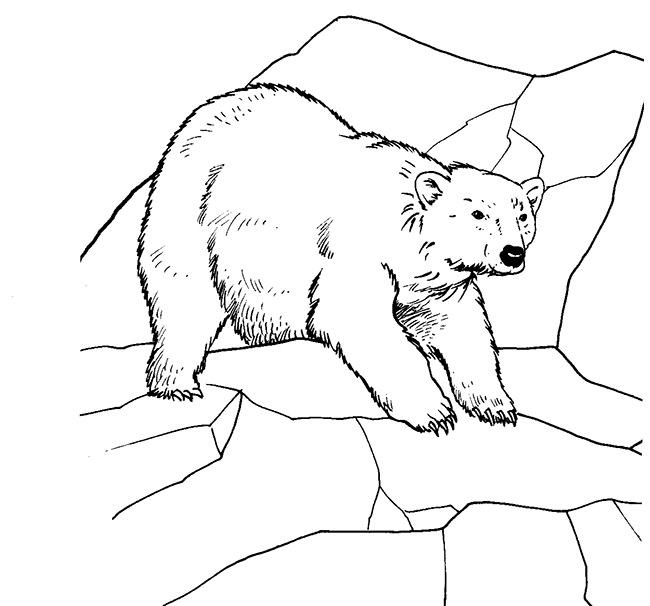 Bear Template - Animal Templates | Free & Premium Templates