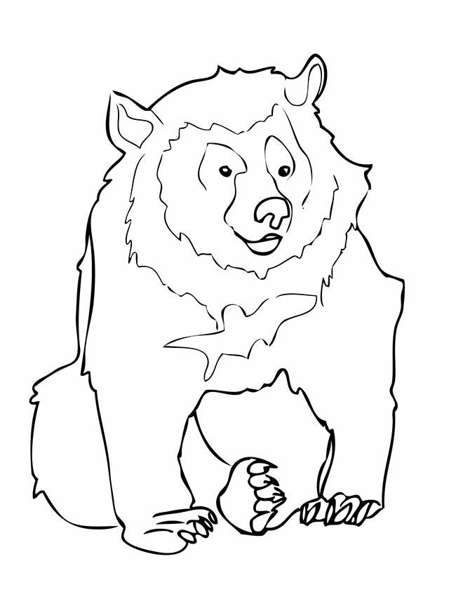 bear template animal templates free premium templates