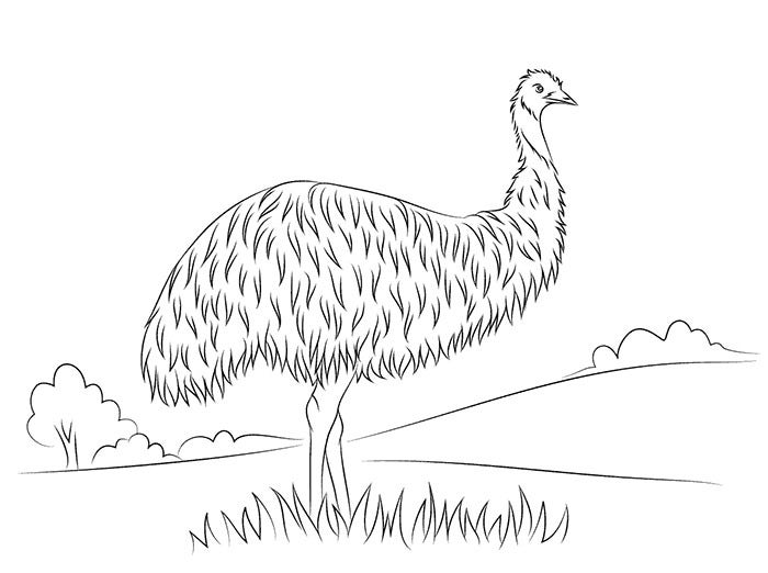 Australian Animal Template Templates Free amp Premium