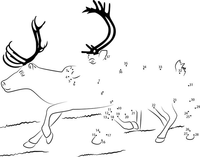 photograph about Reindeer Pattern Printable known as Reindeer Template - Animal Templates Cost-free Quality Templates