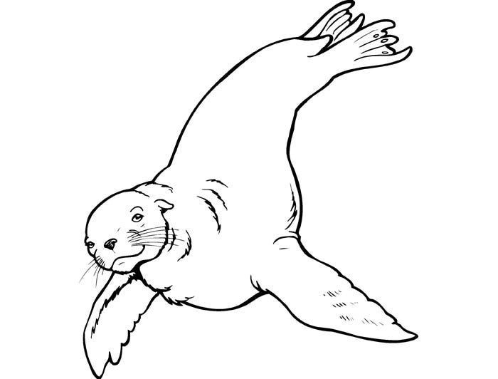 Sea Lion Coloring Pages Printable