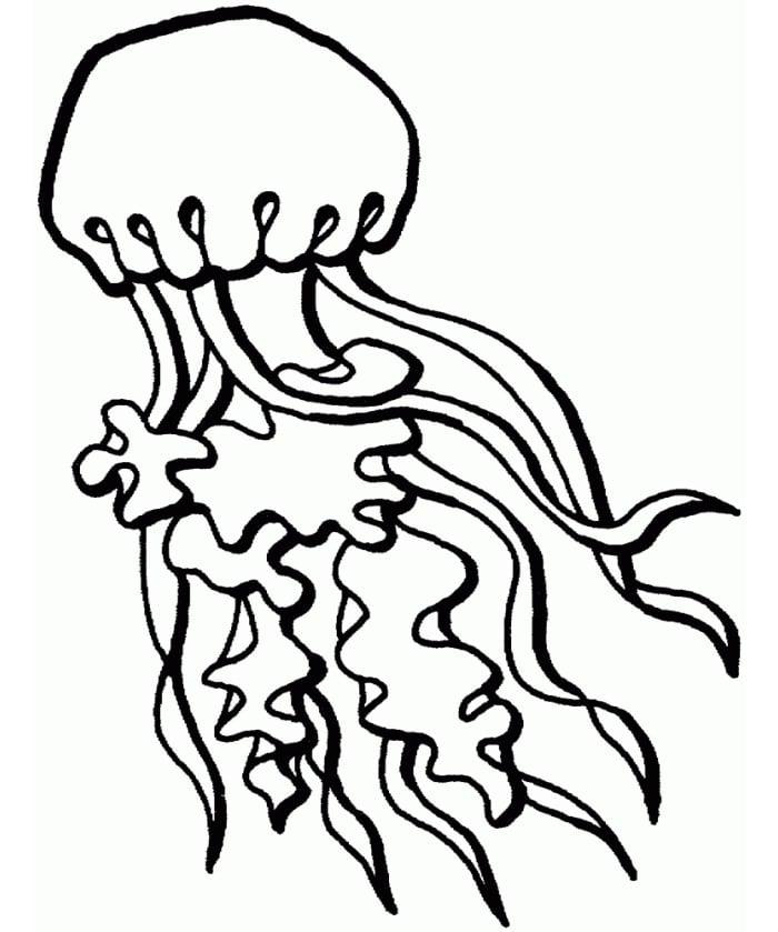 65+ Sea Creature Templates - Printable Crafts & Colouring ...