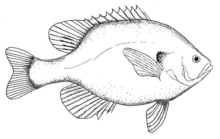 65 Sea Creature Templates Printable