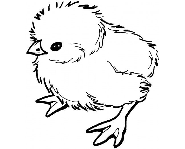 picture regarding Chicken Stencil Printable titled Fowl Template - Animal Templates Free of charge Quality Templates