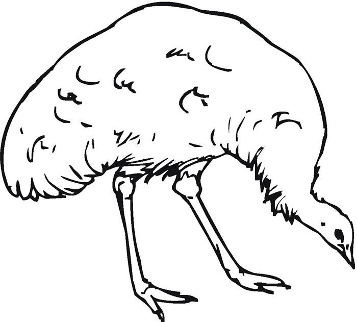 Australian Animal Template