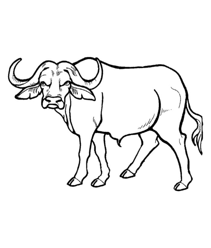 African animal template animal templates free for Coloring pages of wild animals