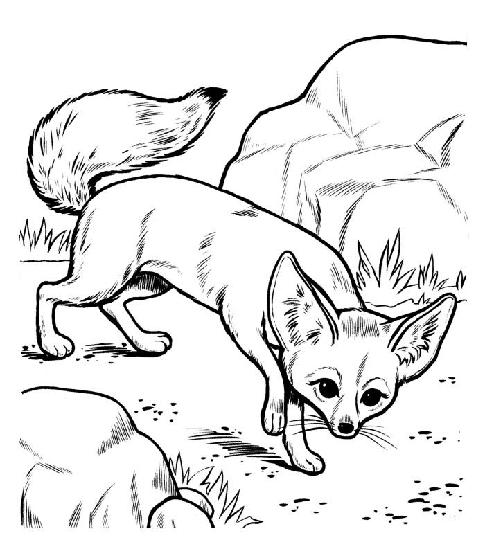 african fox coloring page