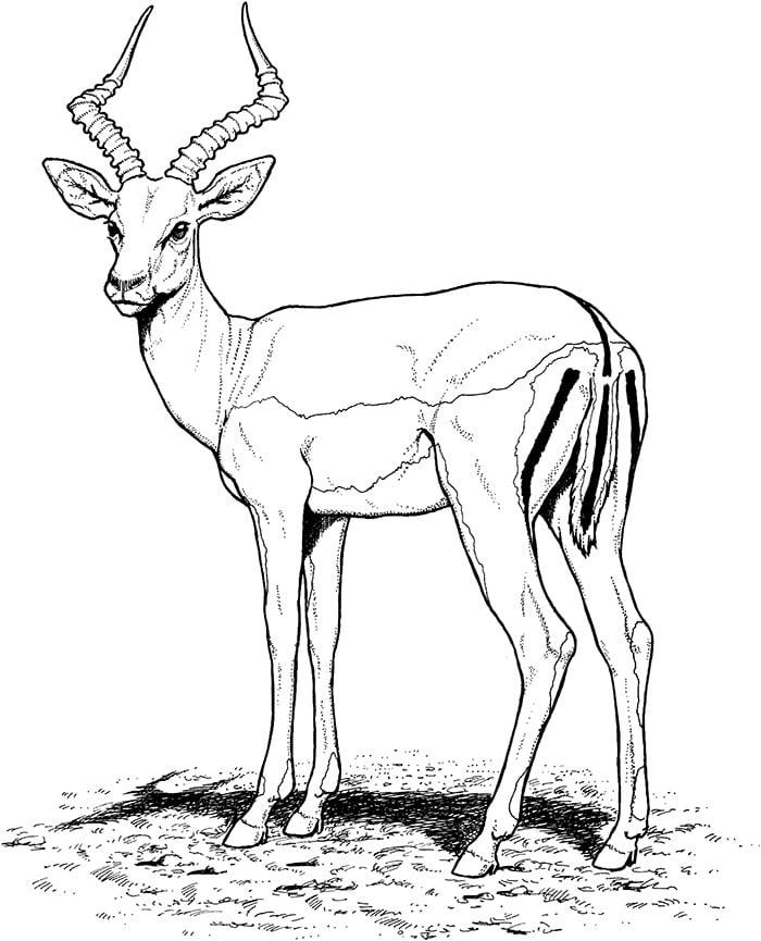 African Animal Template Animal