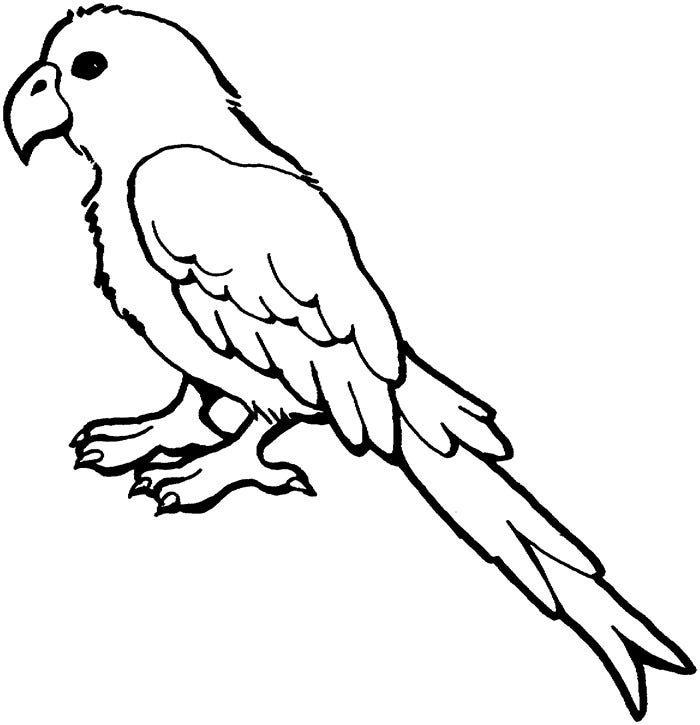 african grey parrot coloring page
