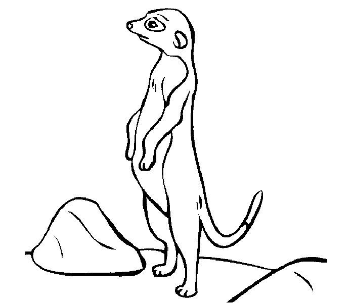 african meercat template