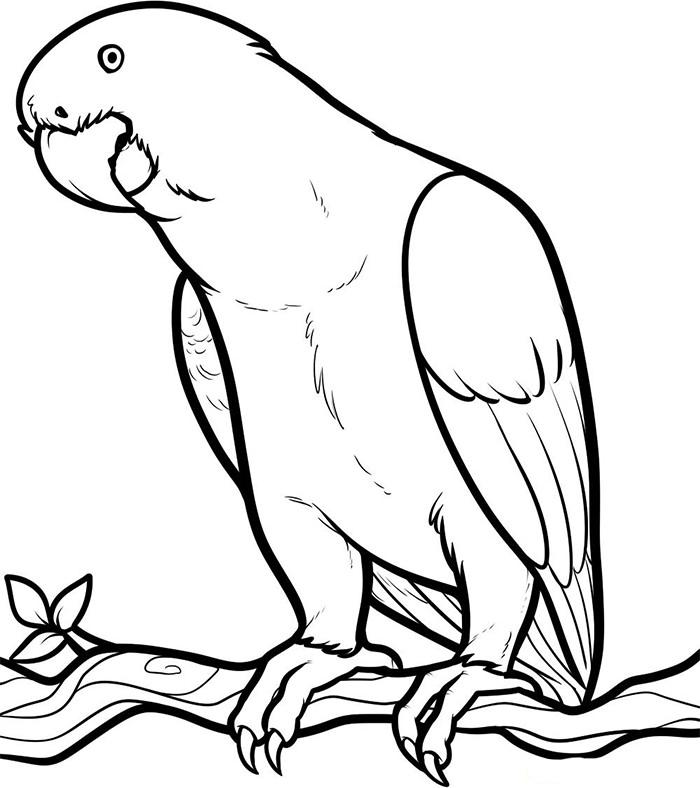 african parrot template