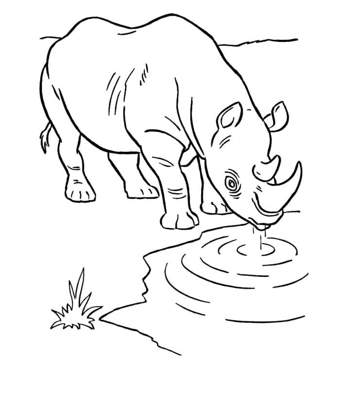 african rhino template