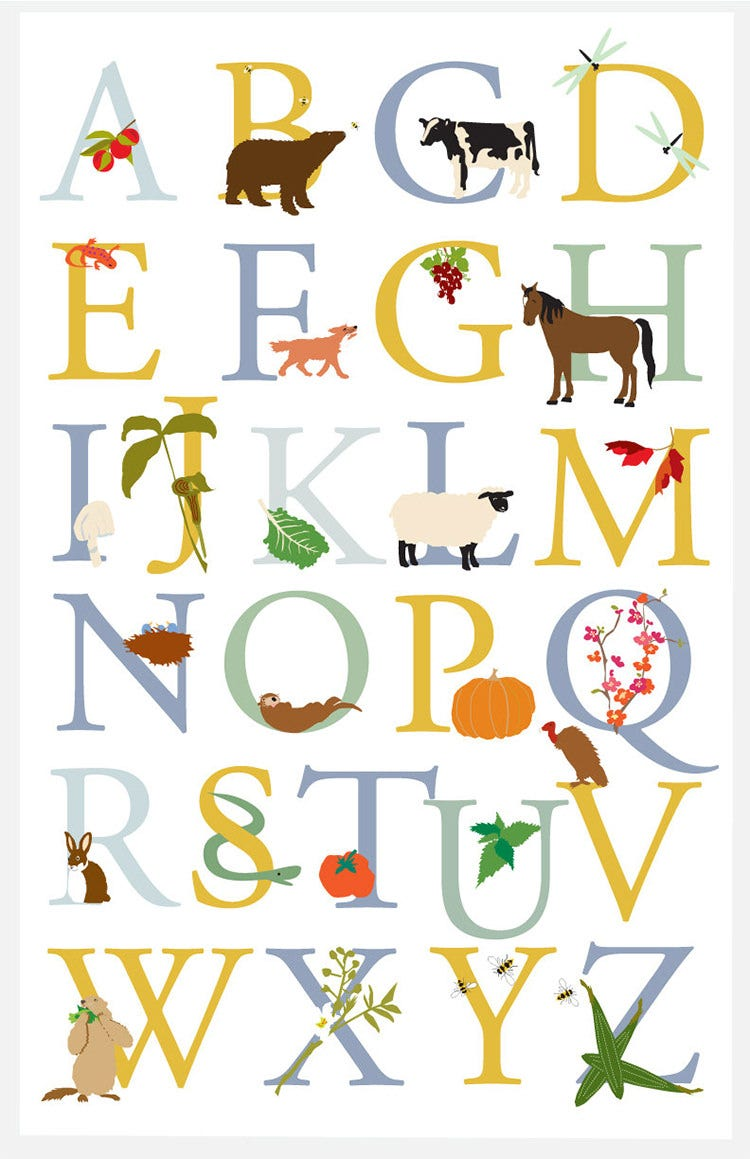 alphabet poster vermont animals