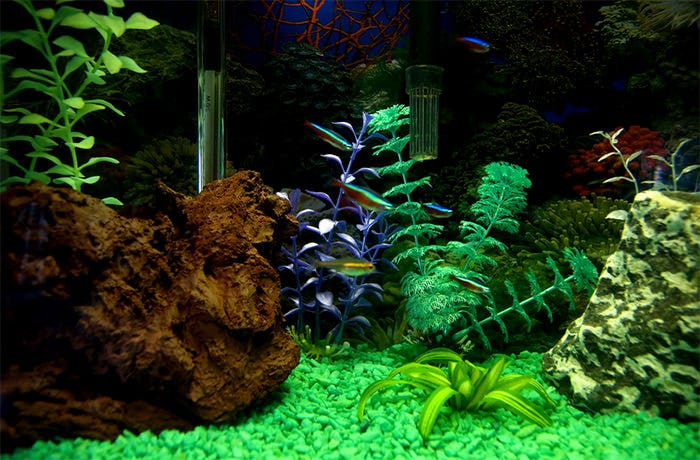 image about Fish Tank Background Printable named 50+ Easiest Aquarium Backgrounds No cost Top quality Templates