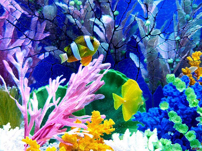 Aquarium Background To Print