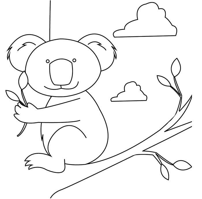 australia day illustrations koala