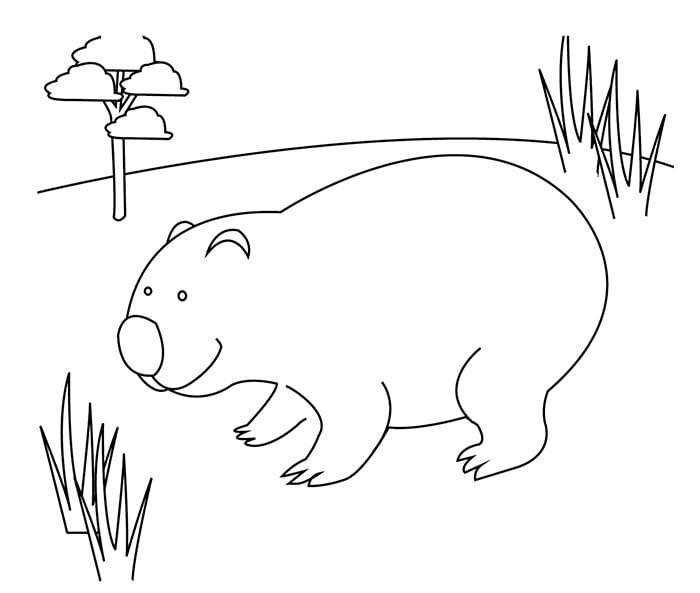 australia day illustrations womba
