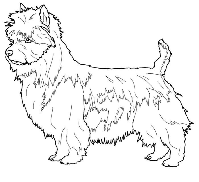 Colouring Pages Australian Animals : Australian animal template templates free