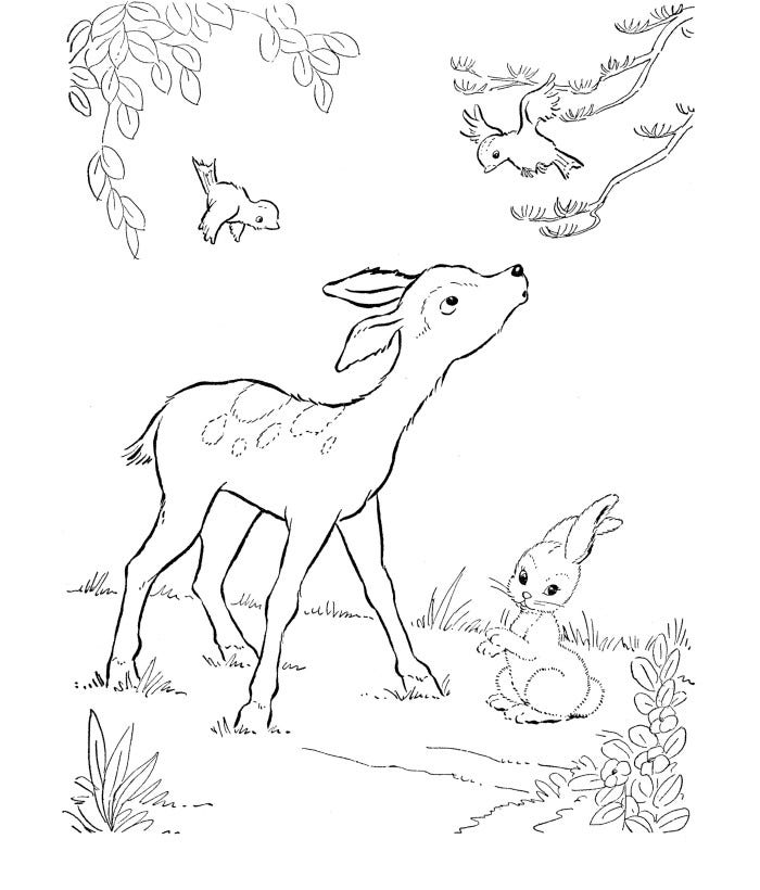baby deer coloring page - Deer Coloring Pages