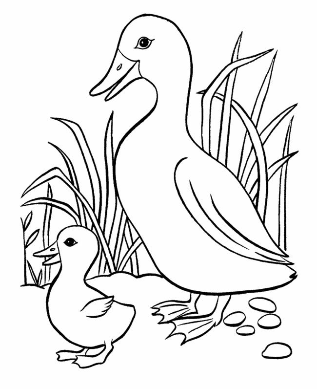 baby duck farm animal template