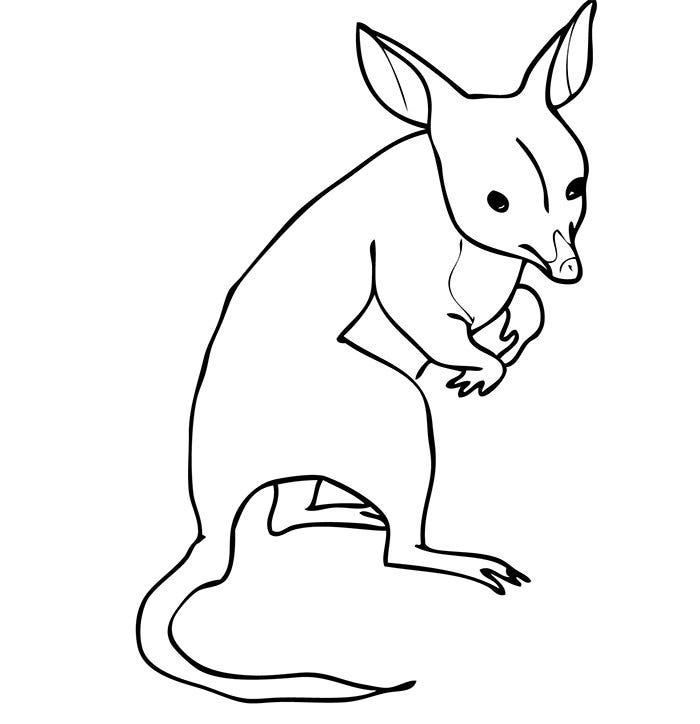 Bandicoot From Australia Coloring Page Template