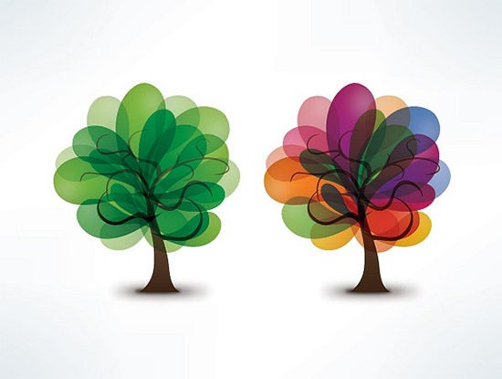 beautiful blooming trees vector