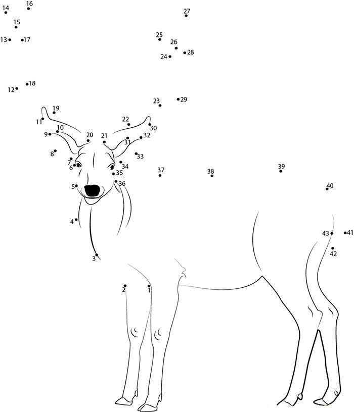 beautiful deer connecting dots