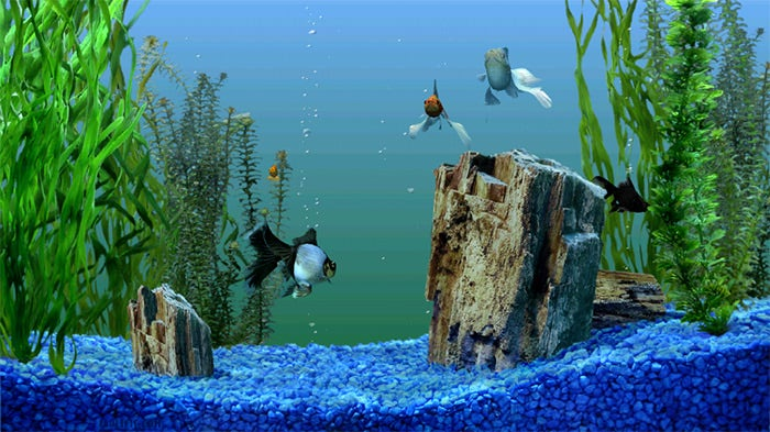 beautiful fish aquarium background