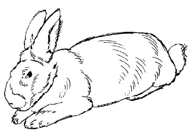 big rabbit template