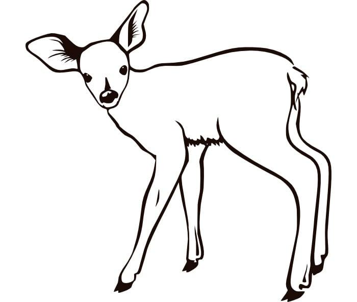 blank deer template