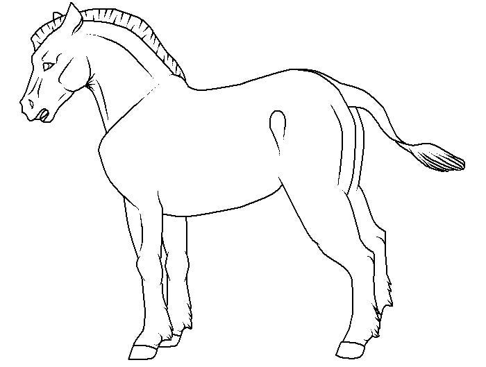 Zebra Coloring Pages Without Stripes Bltidm