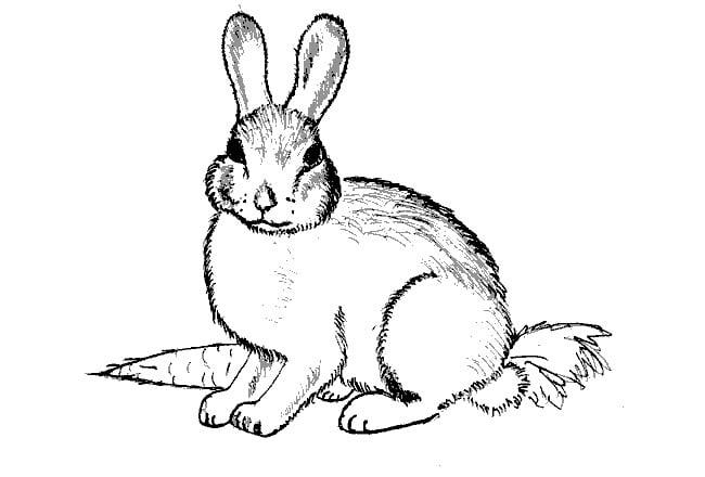 bunny rabbit template