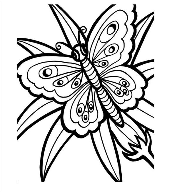 Butterfly Templates  Printable Crafts  Colouring Pages  Free