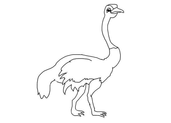 cool ostrich coloring page