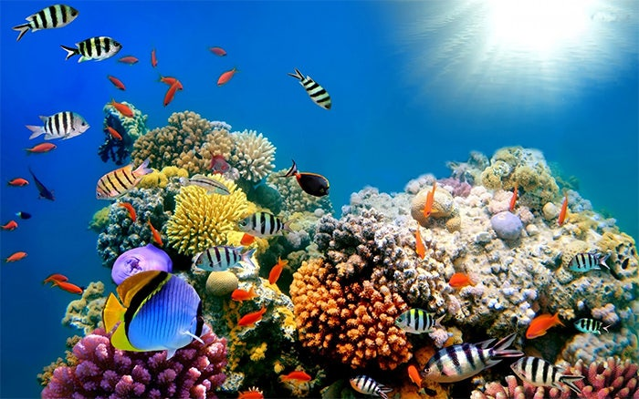 coral reef fish aquarium background