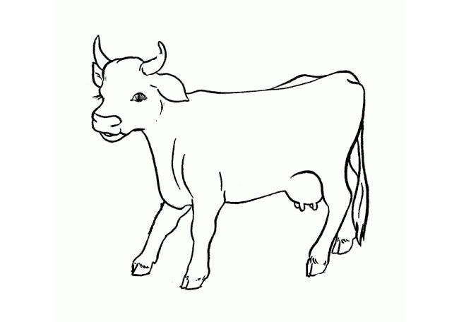 cow animal template