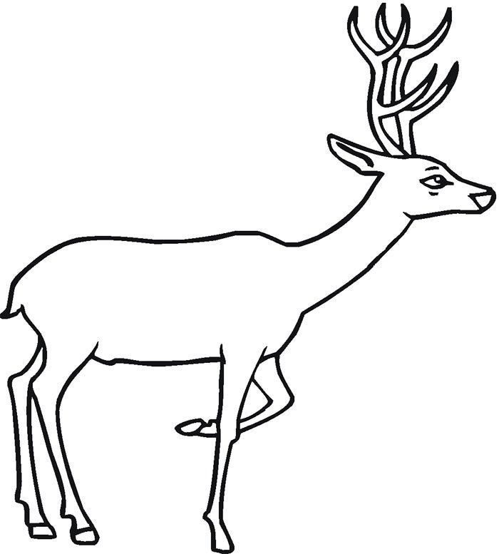 curious deer template