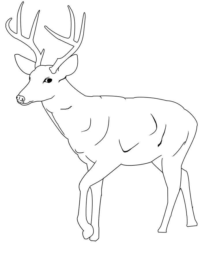 Cute Baby Deer Coloring Pages