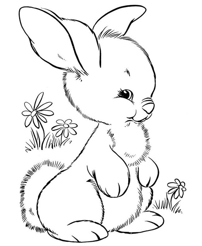 Cute Little Rabbit Coloring Page