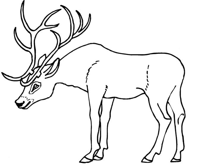 Deer template animal templates for Deer coloring page
