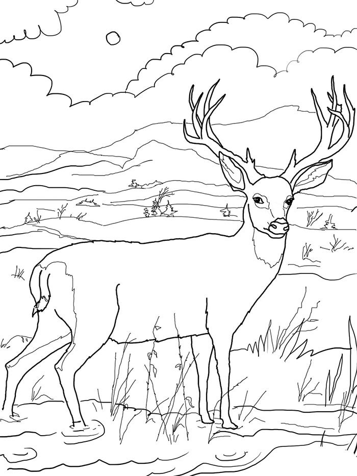 deer coloring page for kids