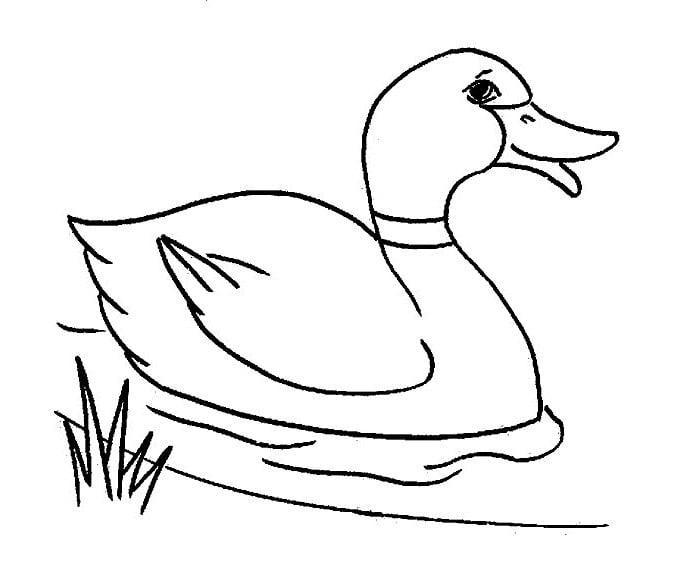 Duck Template - Animal Templates
