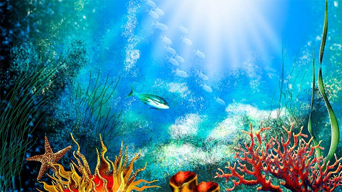 Excellent Aquarium Background