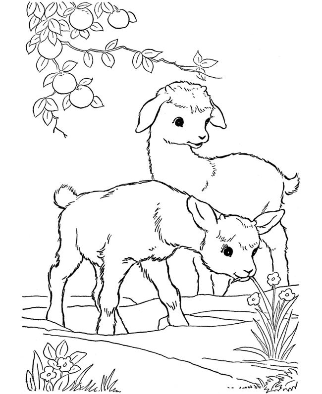 farm animal coloring page 2