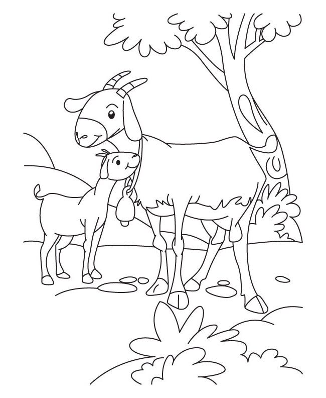 farm animal coloring page 3