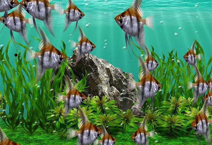 50 best aquarium backgrounds to download print free for Fish tank screen